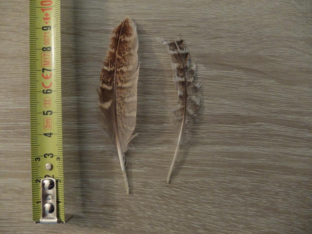 Identification plumes (Ardennes) Dscf9411