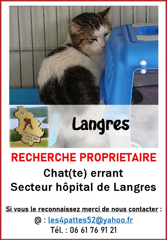 Chat blanc et tigré - Langres 14517010