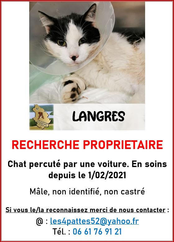 Chat noir et blanc blessé - Langres 14721610