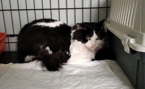 Sylvestre : chat maltraité 15411210