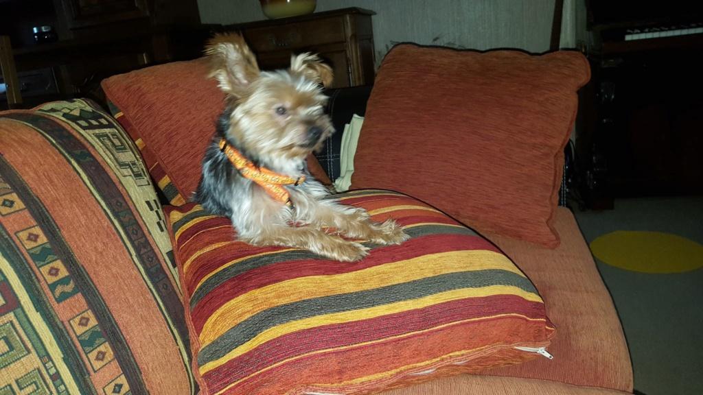 chien trouvé vers Hûmes 157