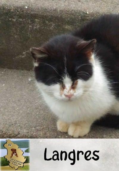 chatte noire et blanche : Secteur Tamaris à Langres 16240910
