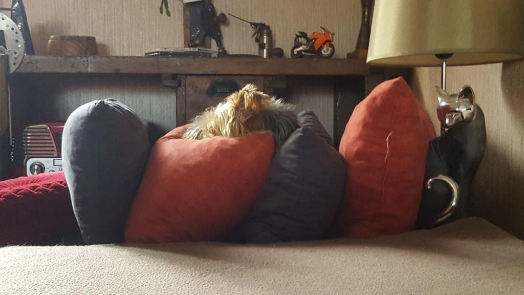 chien trouvé vers Hûmes 246
