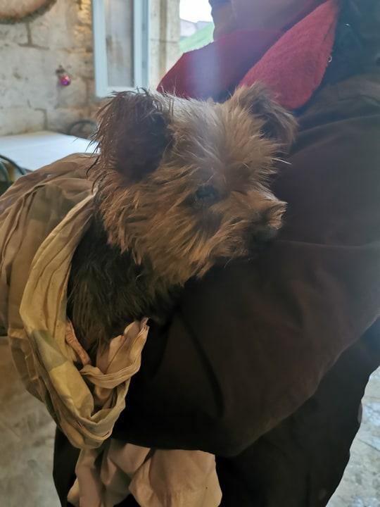 chien trouvé vers Hûmes 79021810