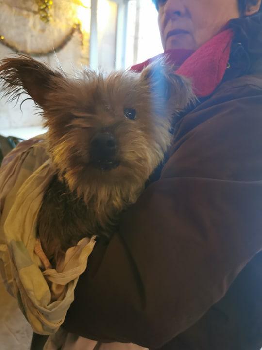 chien trouvé vers Hûmes 79166810