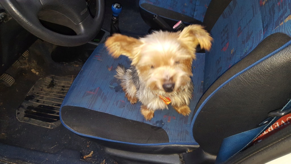 chien trouvé vers Hûmes 80959810