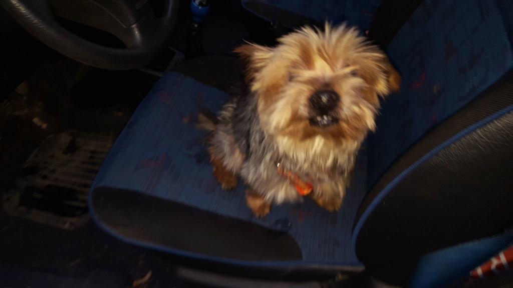 chien trouvé vers Hûmes 81194610
