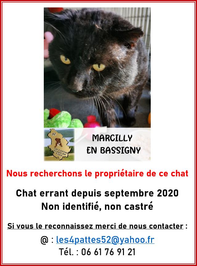 Chat noir - Marcilly : 291RFC Aff_mj10