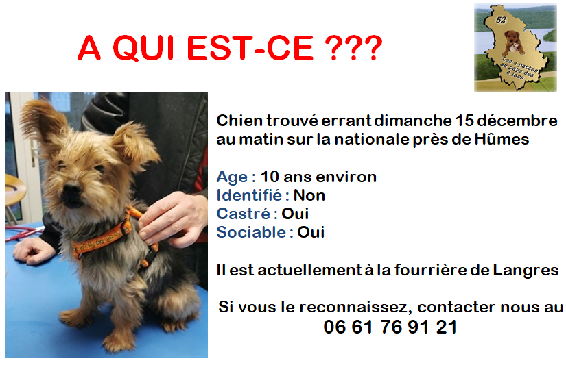 chien trouvé vers Hûmes Loulou11
