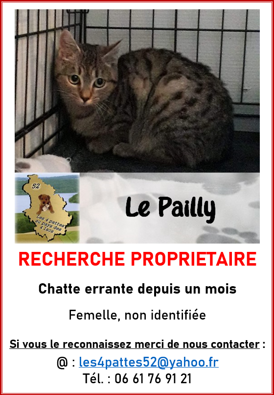 Chatte tigrée - Le Pailly Sibell10