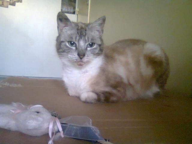 Photos des chats sauvés, avant/après - Page 9 Angie810