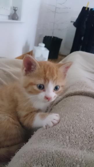 Olaf, les yeux bleus né en septembre 2018 58296410