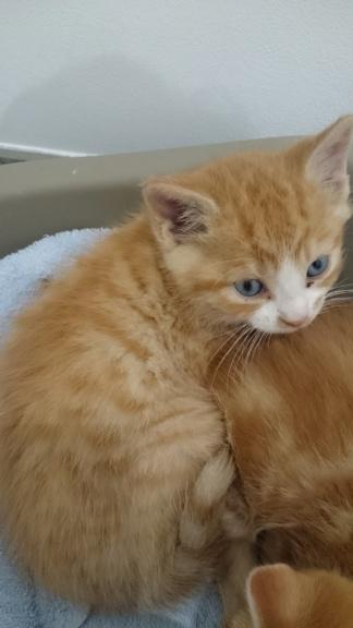 Olaf, les yeux bleus né en septembre 2018 Cf612410