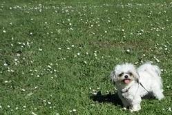 mon petit chien  10439311