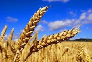 """Вы названы Богом - """"Пшеницей Молитвы!"""" Христианский стих на Жатву, ЦХВЕ 1image10"""