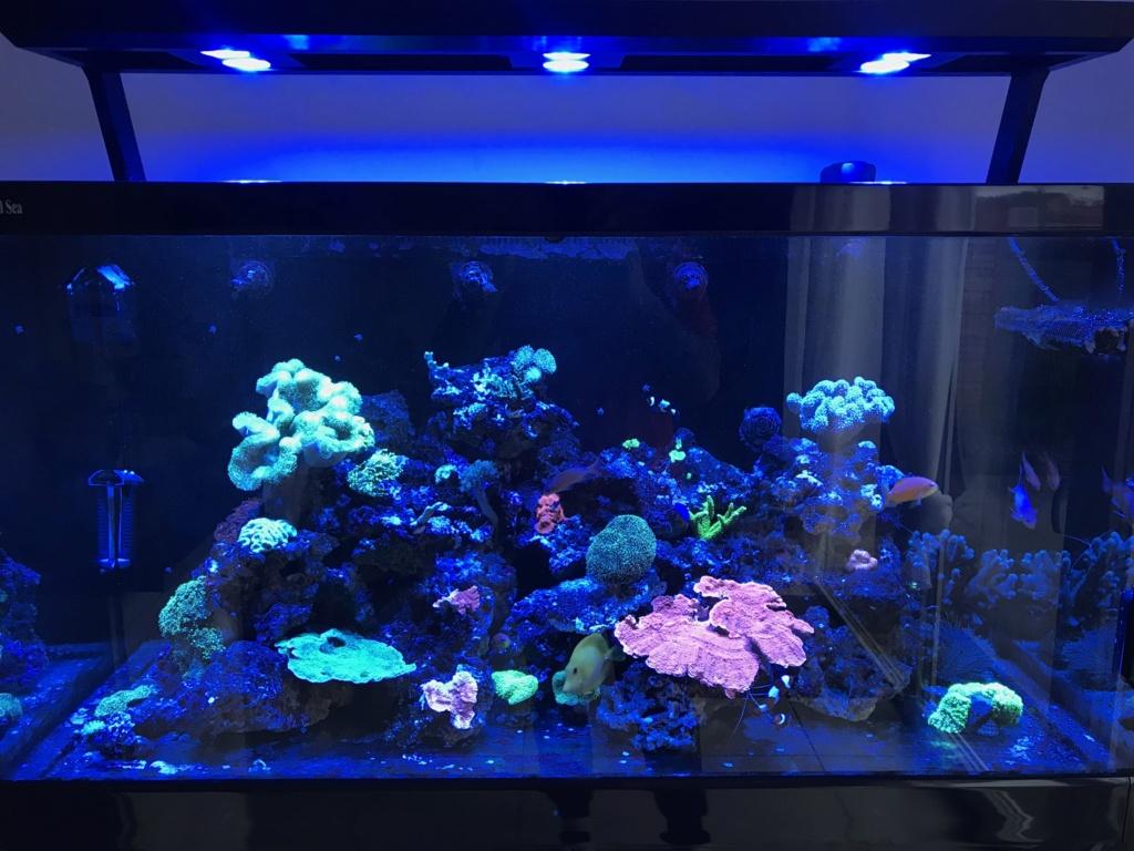 Nouveau bac - Red Sea Max s500 55e74810