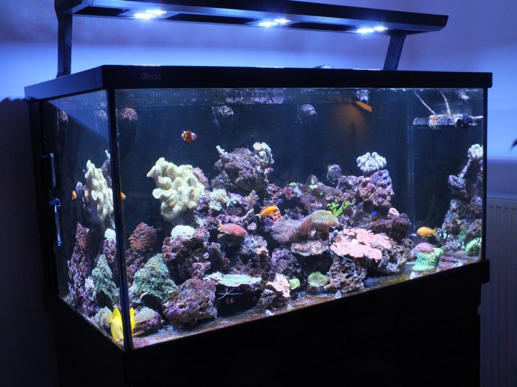 Nouveau bac - Red Sea Max s500 6fa9c610