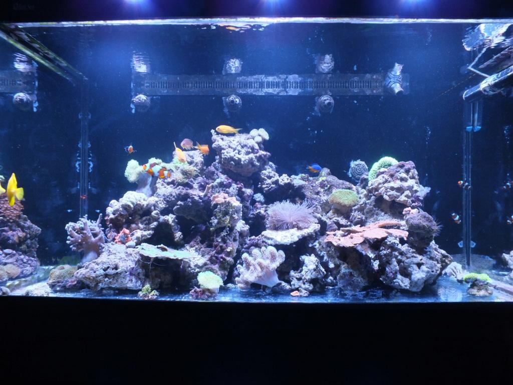 Nouveau bac - Red Sea Max s500 9770e710