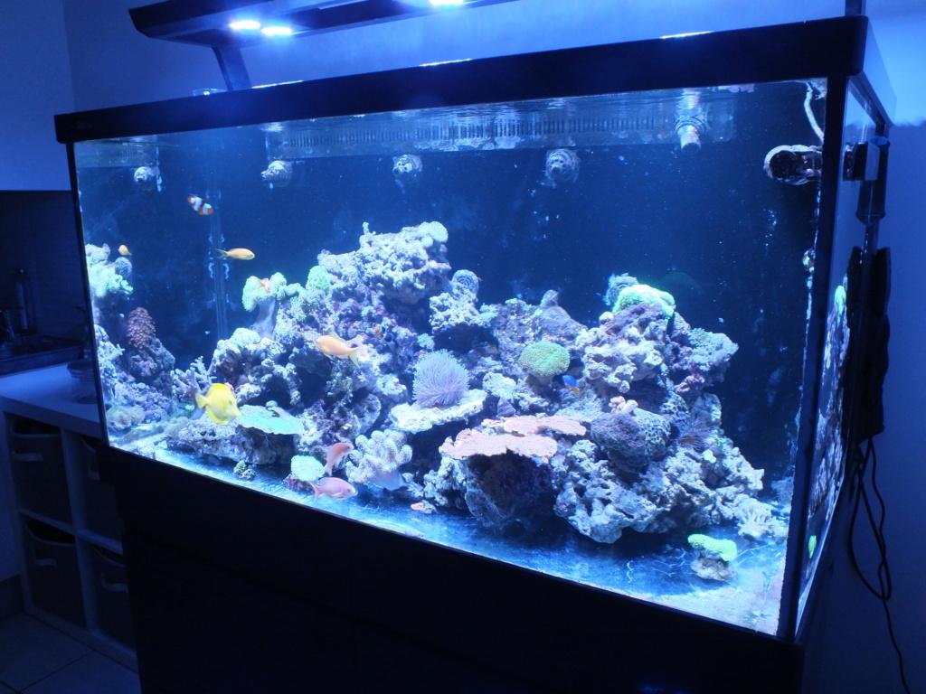 Nouveau bac - Red Sea Max s500 F5fa9710
