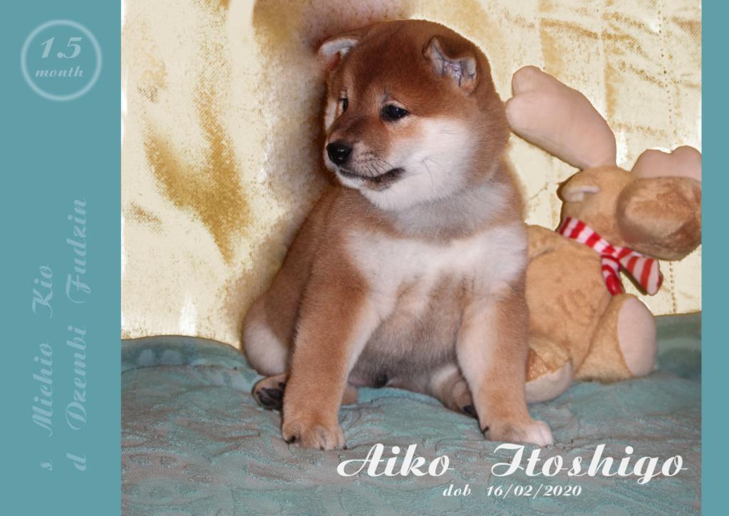 Щенки от пары Michio Kio и Dzembi Fudzin от 16.02.2020 01_aik12