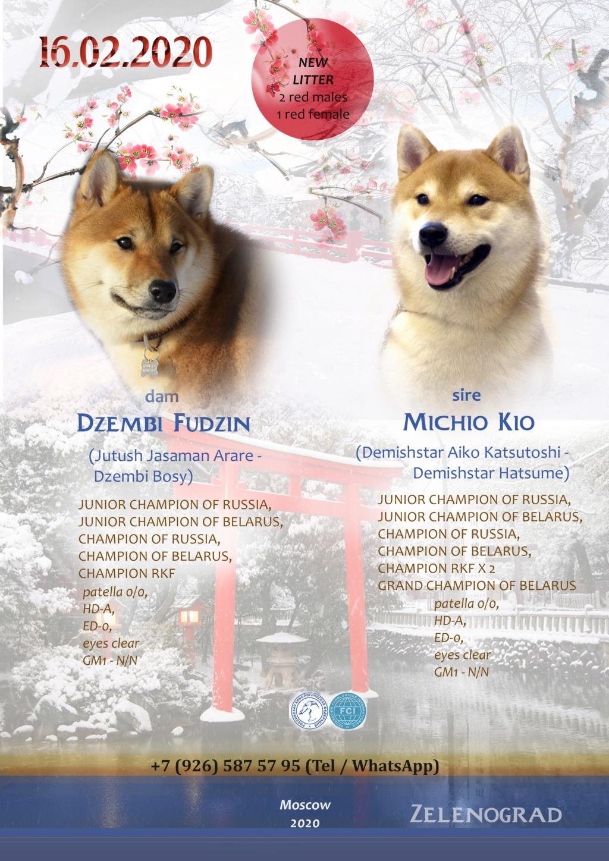 Щенки от пары Michio Kio и Dzembi Fudzin от 16.02.2020 E_a__110
