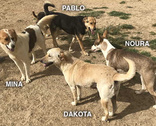 DAKOTA, identifiée 941.000.017.846.972, en pension dpt 78 12_05_11