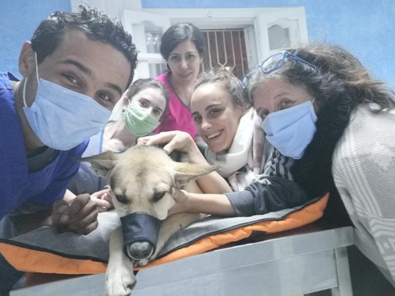 LOUIS, identifié 788.269.100.014.556, en refuge à Tunis 13189110