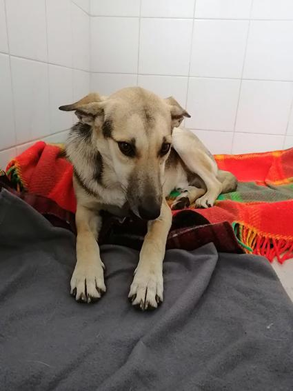 LOUIS, identifié 788.269.100.014.556, en refuge à Tunis 13193210