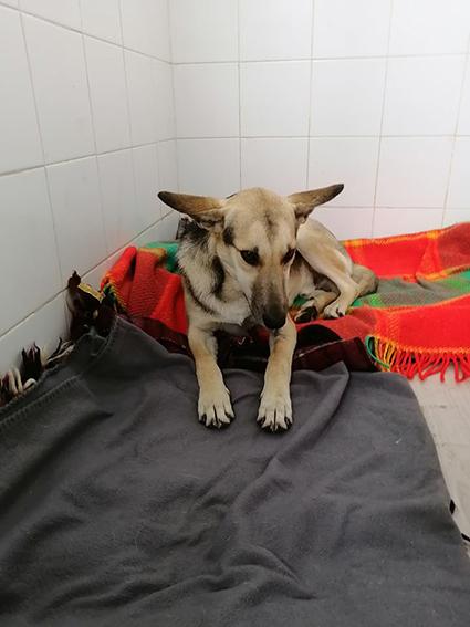 LOUIS, identifié 788.269.100.014.556, en refuge à Tunis 13198910