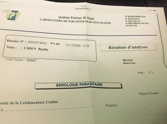 BUDDY, identifié 788.269.100.014.558, en refuge à Tunis 18070110