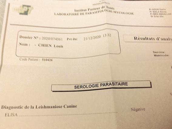 LOUIS, identifié 788.269.100.014.556, en refuge à Tunis 18072510