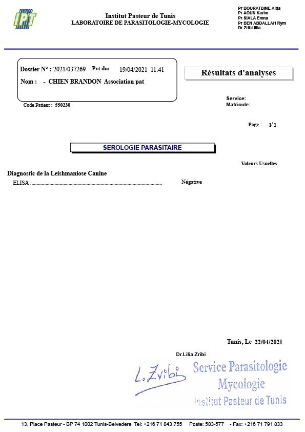 BRANDON, identifié 788.269.100.009.369, en refuge à Tunis 2021_010