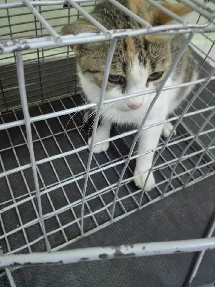 Aide CCTNA pour les animaux de Meriem 42699210