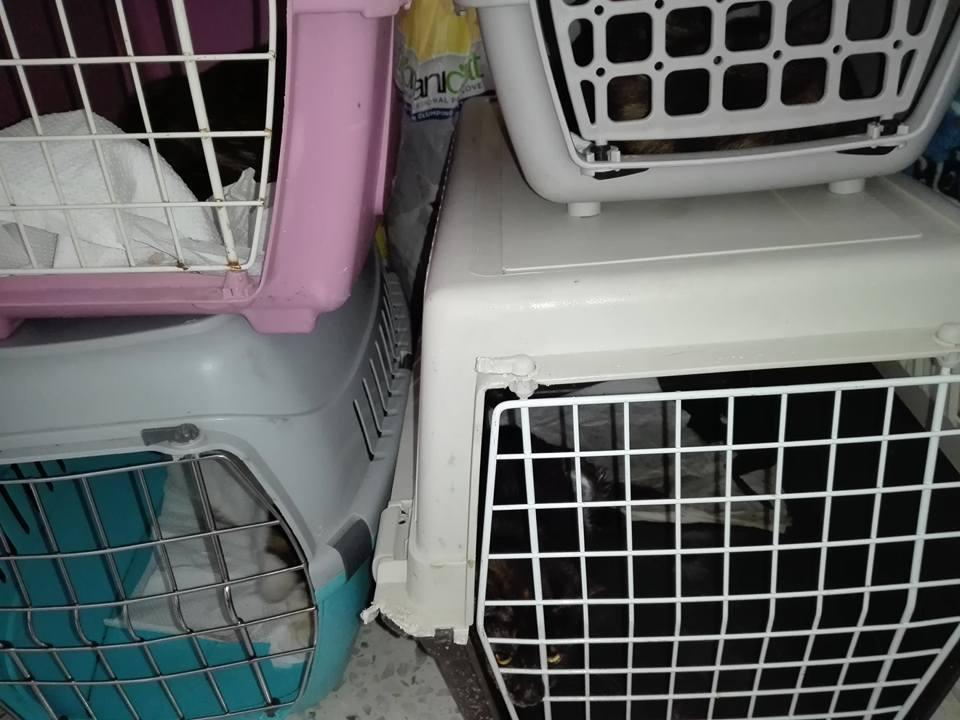 Aide CCTNA pour les animaux de Meriem 42720510