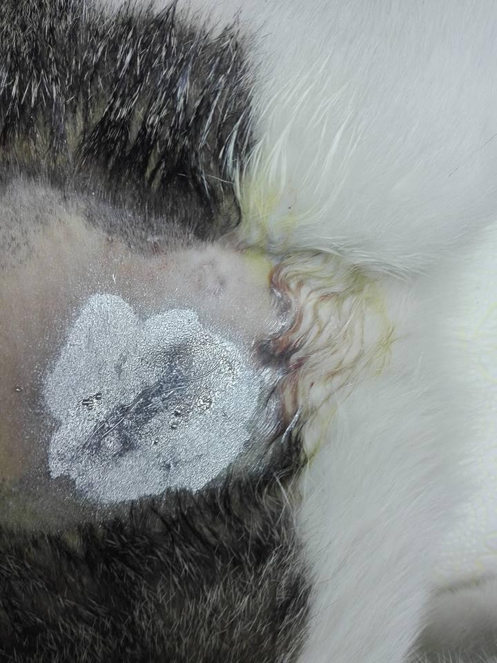 Aide CCTNA pour les animaux de Meriem 42723510
