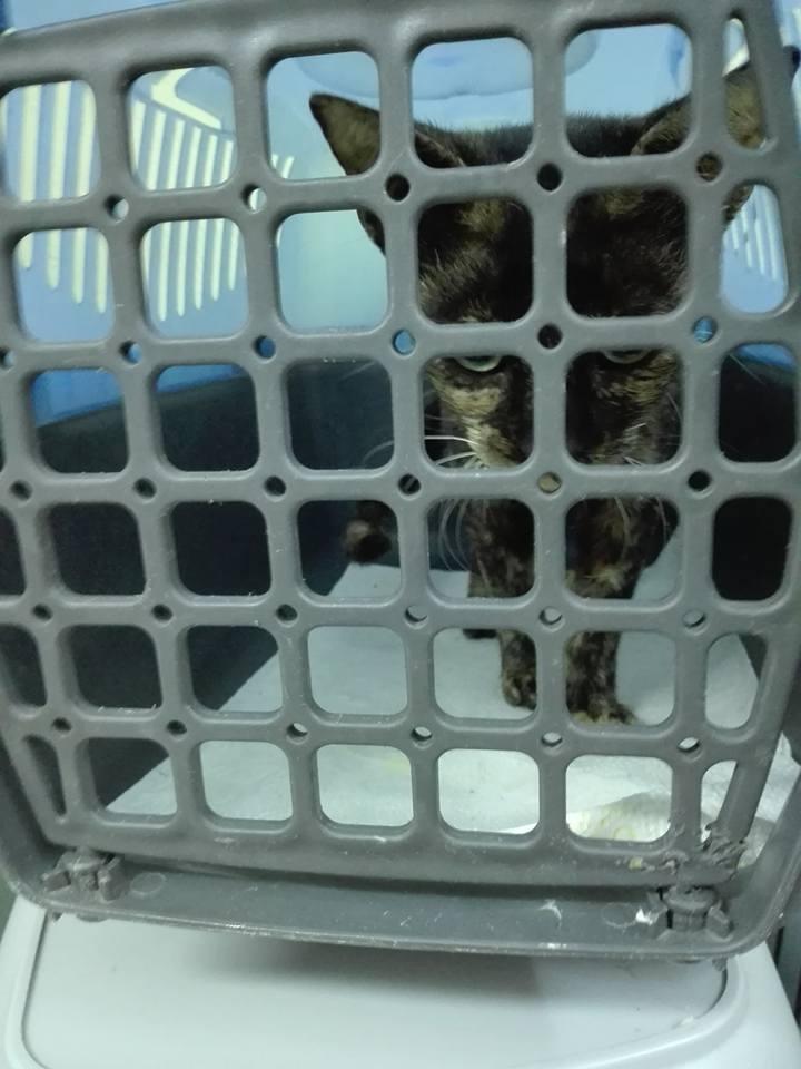 Aide CCTNA pour les animaux de Meriem 42743610
