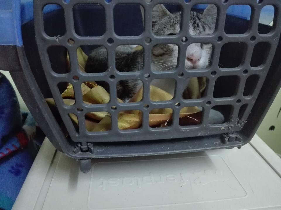 Aide CCTNA pour les animaux de Meriem 42752010