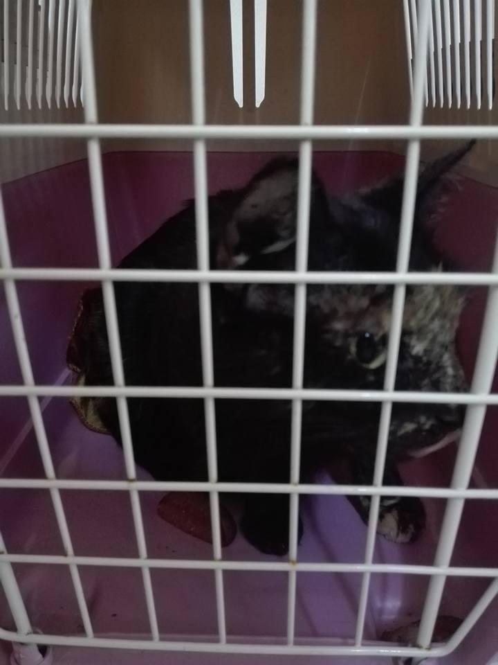 Aide CCTNA pour les animaux de Meriem 42758610