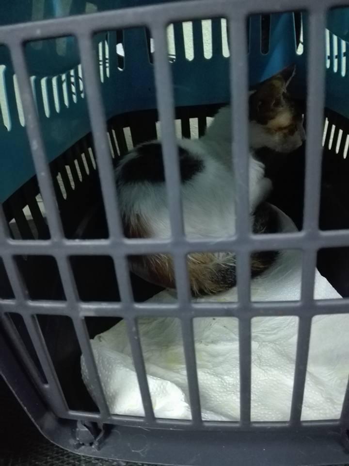 Aide CCTNA pour les animaux de Meriem 42816410