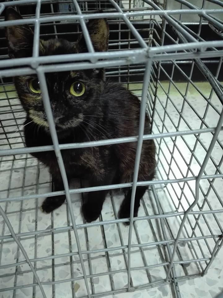 Aide CCTNA pour les animaux de Meriem 42831910