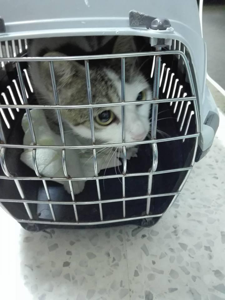 Aide CCTNA pour les animaux de Meriem 42832410
