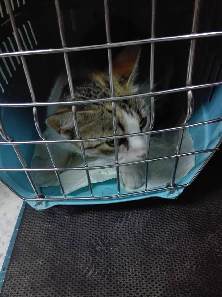 Aide CCTNA pour les animaux de Meriem 42856410