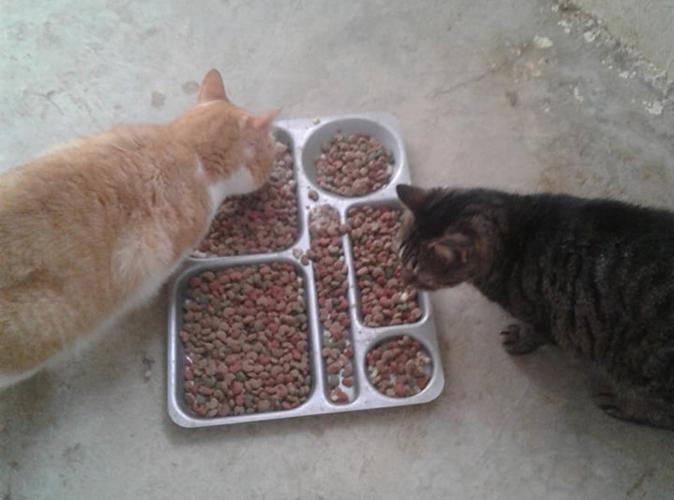 Aide CCTNA pour les animaux du refuge de la PAT 49831810