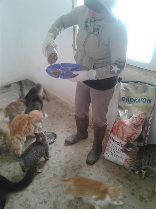 Aide CCTNA pour les animaux du refuge de la PAT 50330310