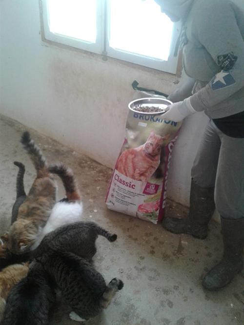 Aide CCTNA pour les animaux du refuge de la PAT 50496710