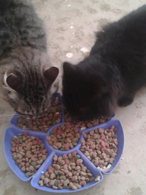 Aide CCTNA pour les animaux du refuge de la PAT 50562810