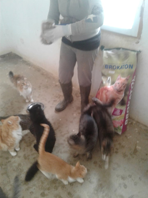 Aide CCTNA pour les animaux du refuge de la PAT 50601710