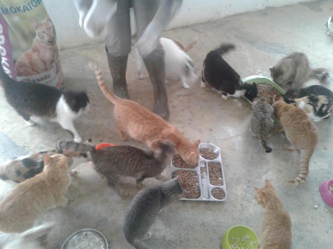 Aide CCTNA pour les animaux du refuge de la PAT 50647811
