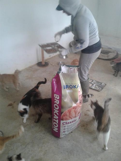 Aide CCTNA pour les animaux du refuge de la PAT 50796810