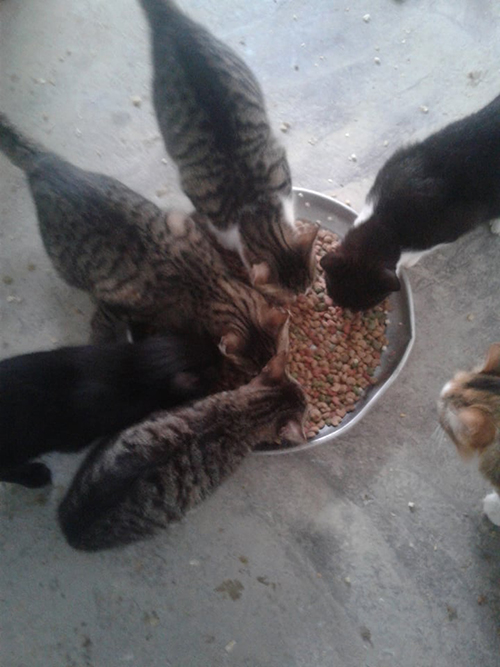 Aide CCTNA pour les animaux du refuge de la PAT 50805211